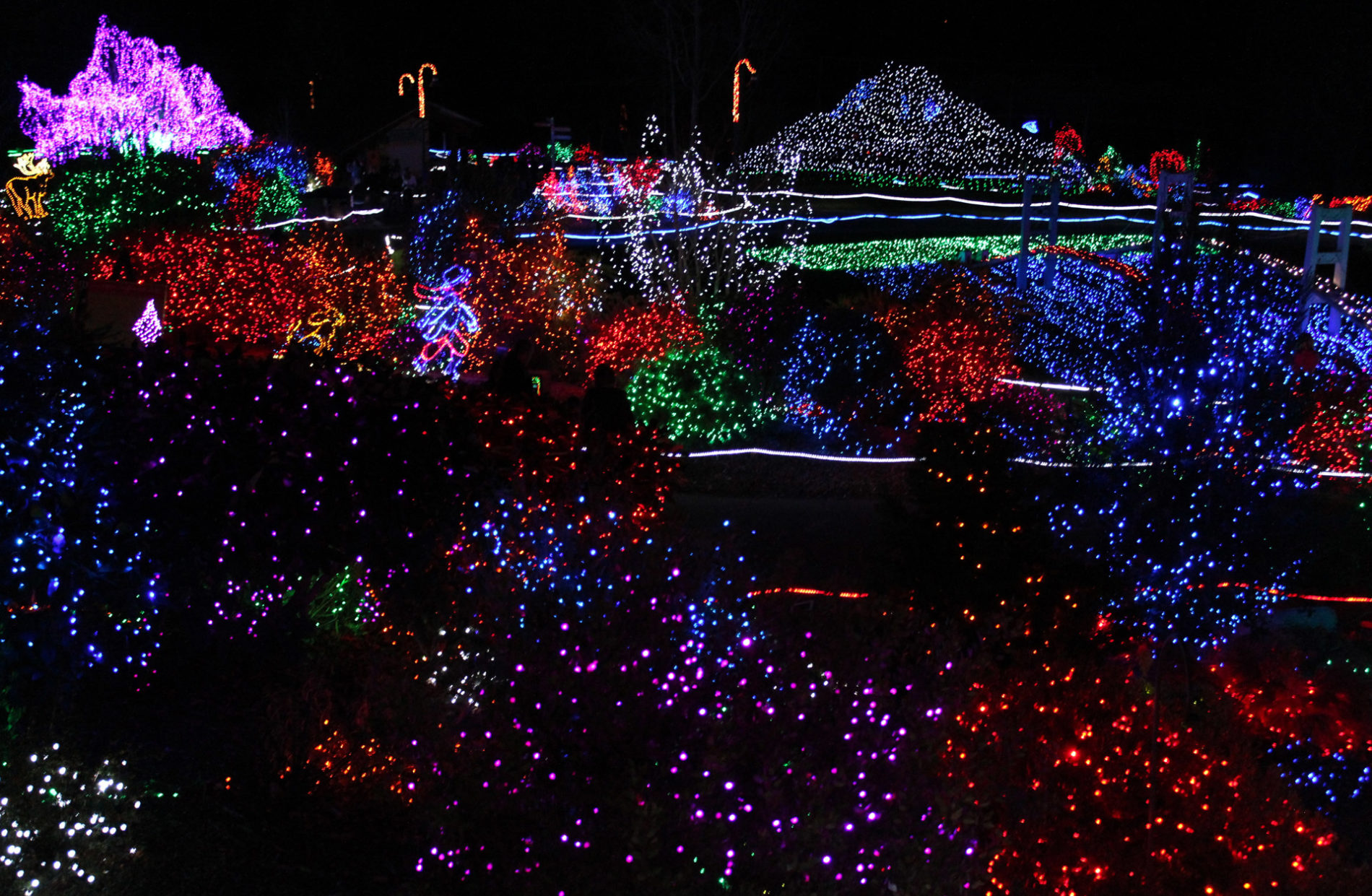 hundreds of colorful twinkling holiday lights and displays