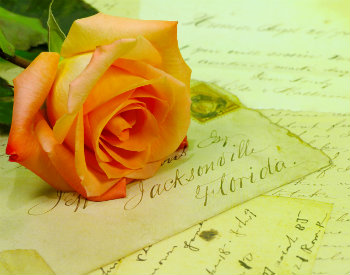 Peach rose lying on antique letters